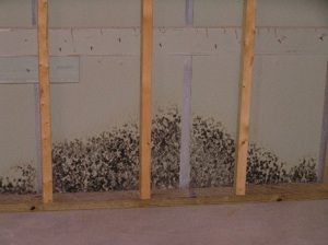 Mold behind drywall