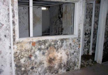 mold remediation 07
