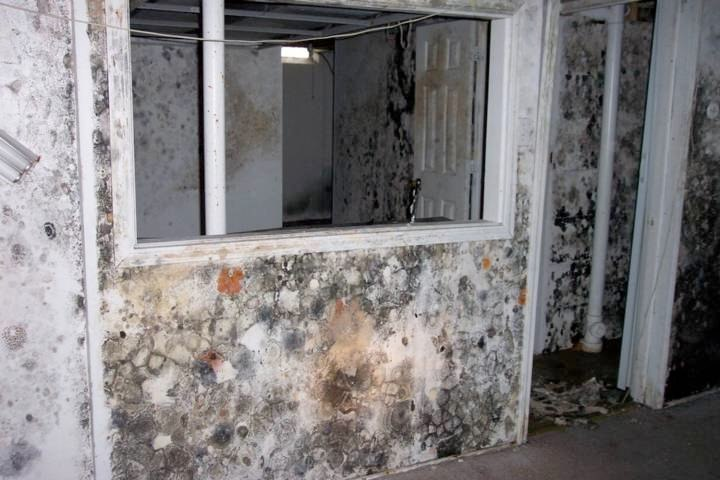 mold remediation 07