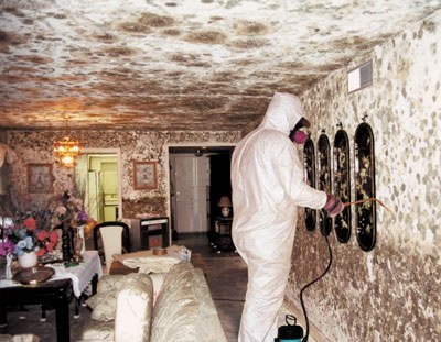 mold remediation 08