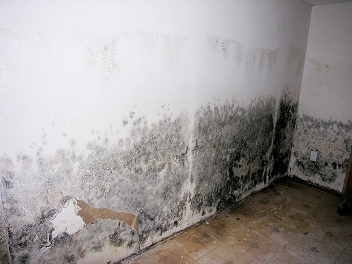 mold remediation 11